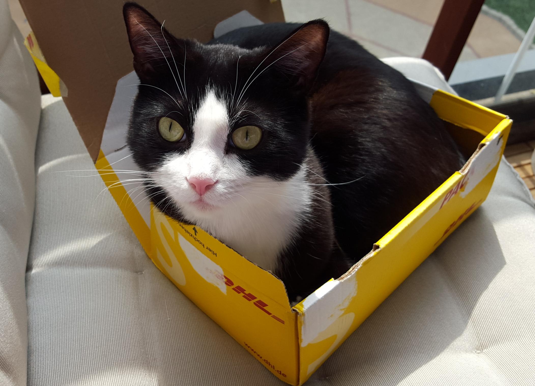 STOREE's lucky charm cat